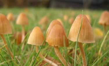 cropped-gljive-za-naslovnu-3.jpg