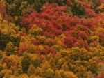 jesen-1.png