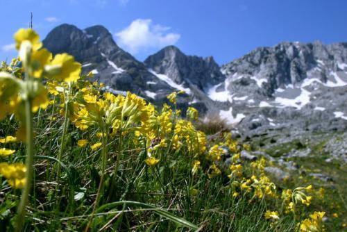 Udruzenje  za zastitu prirode Zeleni Neretva Konjic BiH – BrosuraPrenj
