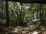 Čudesno lijepe, očuvane, šume bukve na Plasi