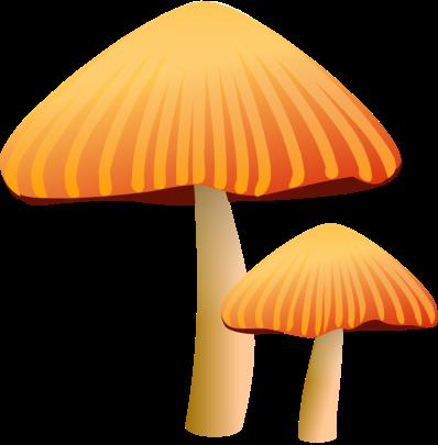 mushrooms9