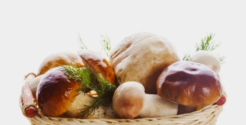 Gljive vrganji za naslovnu